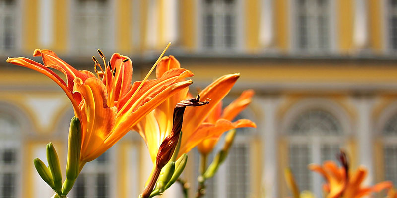 Spring Maintenance Tips for Building Managers